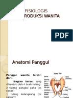 Anatomy Kehamilan
