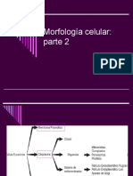 Morfologia Celular 2
