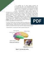 Neuronas (1)dfghjk