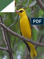 Fauna de La Selva Peruana Los Paucares
