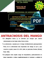 Antracnosis Del Mango
