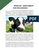 Una Vaca Modificada Genéticamente Produce Leche Hipoalergénica