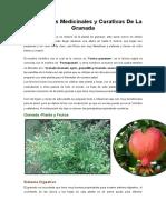 Propiedades Medicinales y Curativas de La Granada