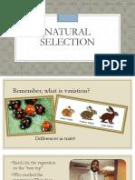 02- natural selection  matt