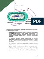 La Célula Procariótica