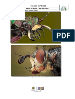 Guia Laboratorio # 1 Anatomia de Insectos