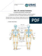 Clase 4 Taller Cuerpo Humano