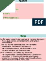 Inflorescencias, Flores y Frutos-II-2014