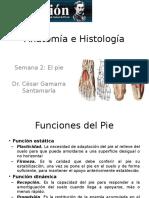 Anatomía e Histología 02