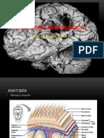Radiología Neurológica I