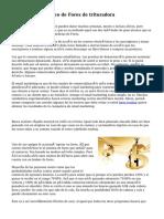 Informe automático de Forex de trituradora
