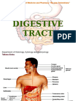8. Digestive Tube