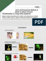 Presentation Vegetal (1) (1)