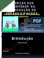 Campilobacteriose, Tricomonose e Neosporose bovina