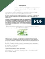 Opiniondelvideo (2).pdf