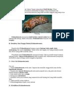 Echinodermata Berasal Dari Bahasa Yunani Yang Artinya Kulit Berduri