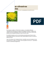 10 Plantas Silvestres Comestibles