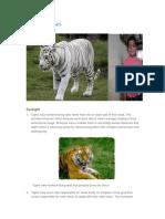 Tigers Senses