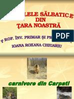 0 Animale Salbatice Din Romania