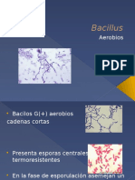 4. Bacillus