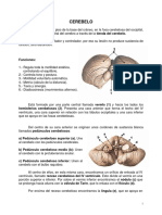 Sistema Nervioso Central. Cerebelo