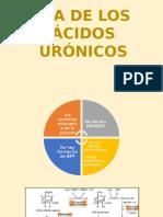 Vía de Los Ácidos Urónicos