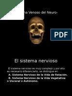 Clase 7 - Neuroanatomia Mat 2014