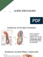 Hydrocele Varicocele