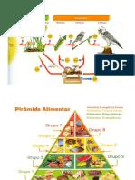 Cadeia Alimentar e Pirâmide Alimentar