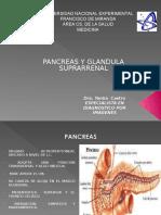 Pancrea y Suprarrenal.