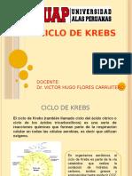 0.-CICLO DE KREBS.pptx