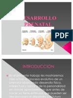 Desarrollo Prenatal Listo