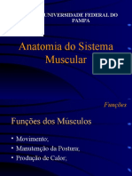 Miologia Musculos 091102065552 Phpapp01