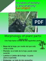 Clase-6-Hoja-sp.pptx