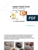 Indonesian Fossil Coral
