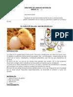 El Huevo de Gallina Macrocélula