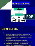 Clase Leptospira