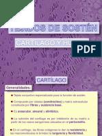 Cartilago y Hueso 2012