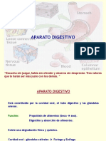 16a Clase Aparato Digestivo