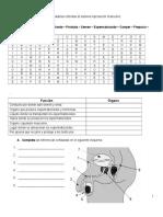 Sistema Reproductor Masculino y Femenino.doc'