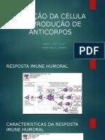 Ativação Da Célula b e Produção de Anticorpos