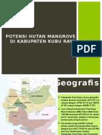 Potensi Hutan Mangrove Di Kabupaten Kubu Raya