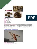 tous les tp de botanique - www.espace-etudiant.net.docx