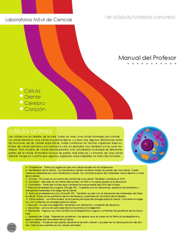 Manual Celula Cerebro Diente Corazon