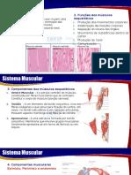 4 - Sistema Muscular