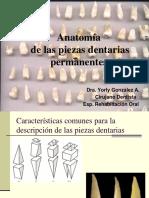 Anatomia Dentaria Clase Dra. Gonzalez 2016