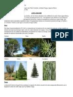 tarea de c. naturales.docx