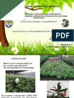 Cultivo de flores de maceta en Morelos, Mexico.pptx