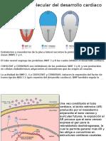 Regulación Molecular Del Desarrollo Cardiaco