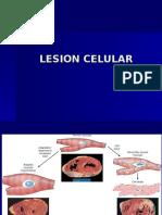 2.Lesión Celular Reversible e Irreversible